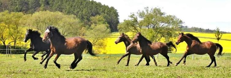 ranch oliver